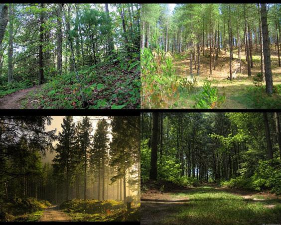 Impressionen aus dem Wald