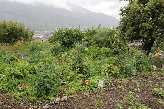 Gartenkindprojekt Chur (Foto zVg)