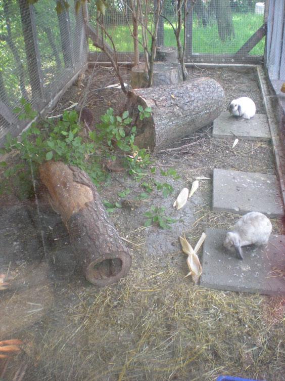 Außengehege Kaninchen Zwergwidder siam