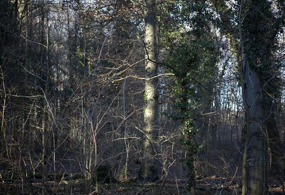 """aus der Serie: """"Tree Winter""""© Ellen Bornkessel"""