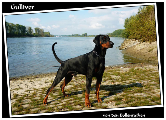 20.10.2013 - Den 23.ten Lebensmonat am Rhein gefeiert.