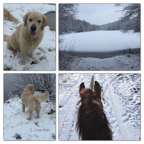 Endlich mal Schnee..... Mit Hunden und Pferd unterwegs! Traumhaft!!!!!!