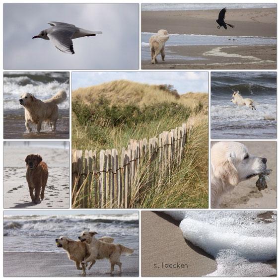 Hundeurlaub In Holland