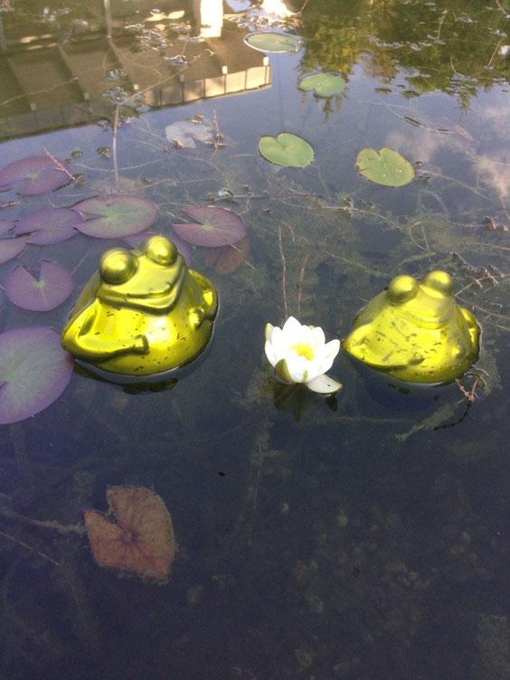 In unserem Teich ......
