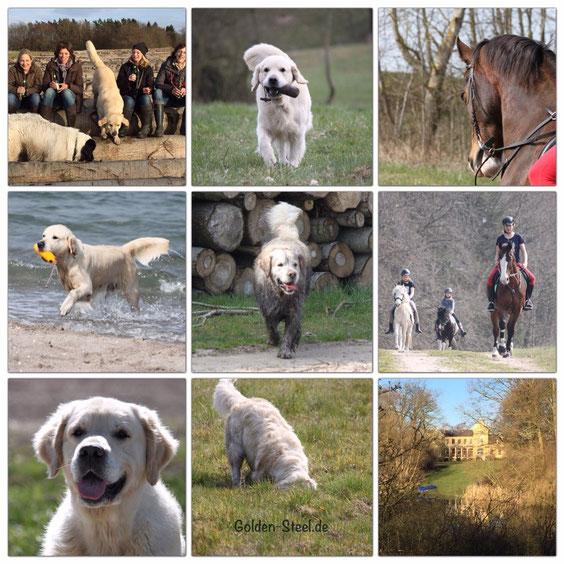 Mensch-Hund-Pferd Urlaub