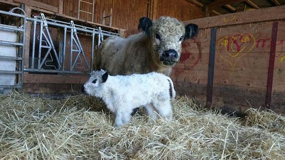 Am 17. 3.16 ist nach einer normalen und raschen Geburt Kiruna auf die Welt gekommen. Ihre Mutter Kitty ist eine ausgesorochen fürsorgliche Mutter