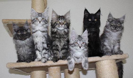 Letztes Gruppenfoto mit allen 6 Kitten. Von links: Happy, Haylie, Holly, Hype, Hunter und Hector