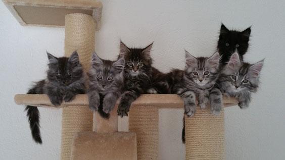 Hier mit 11 Wochen. Von links: Happy, Hector, Holly, Haylie, Hype und hinten Hunter.
