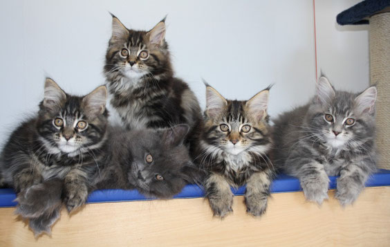Amor, Alpha, Apollo, Acadia, Adonis. Auf diesem Bild sind wir fast 12 Wochen alt.
