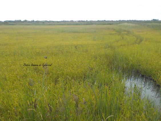 rizière Camargue agroécologie visite agriculture biologique culture du riz