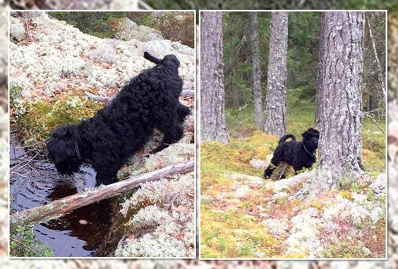 Anouk auf Entdeckungstour im schwedischen Wald...