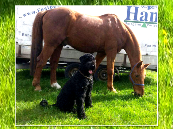 Joy und ihr großer Freund, ein perfektes Team / Joy and her big friend, the perfect team