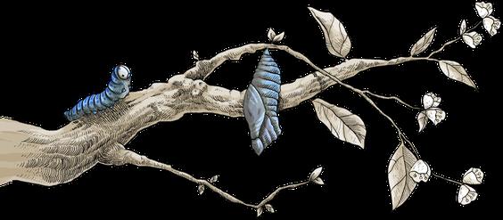 Changer de vie grâce au coaching de vie, selon J.Tournier, psy/coach La Rochelle. La chenille tisse son cocon pour s'y retrouver quelques temps. Elle va muter, se transformer en papillon qui prendra ensuite son envol.