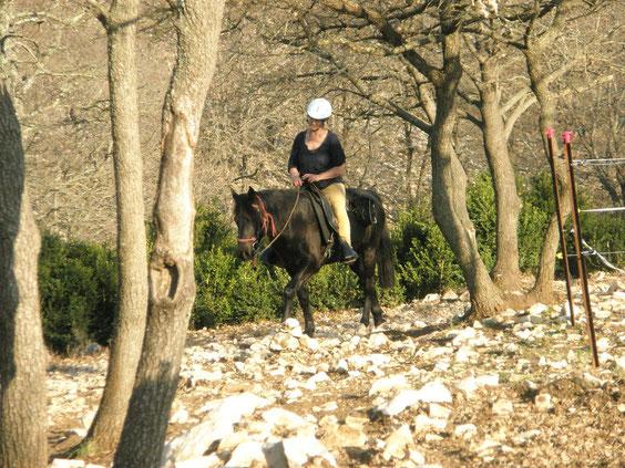 dusty mountain ranch rocky mountain horse montpellier france etalon chaval hongre jument poulain pouliche chevaux noir chocolat taffy à vendre vente vends prix tarif saillie FENDER ROCKY gait amble