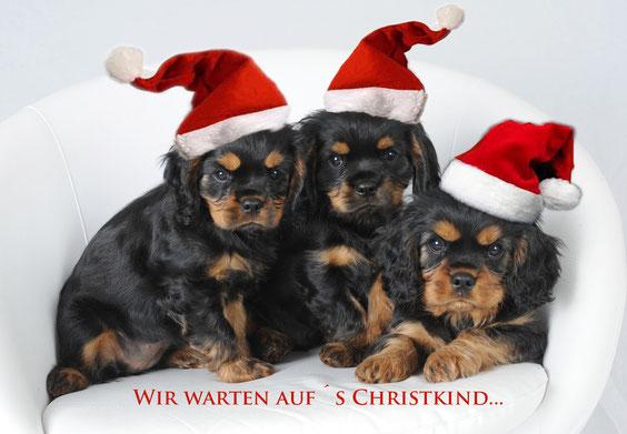 Noch sichergestellt vor Auszug! Die Lechwehrcavaliere wünschen Frohe Weihnachten und ein glückliches neues Jahr! (von links nach rechts Andratx,  Andrea (Mansa) und Adagio (jetzt Charly) !