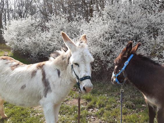 los geht´s - Eselwandern mit Aron und Karel