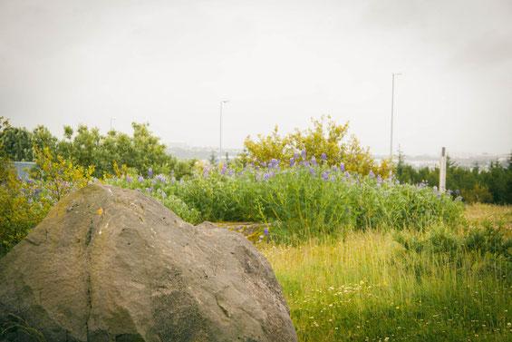 Auf dem Hügel Öskjuhlíð