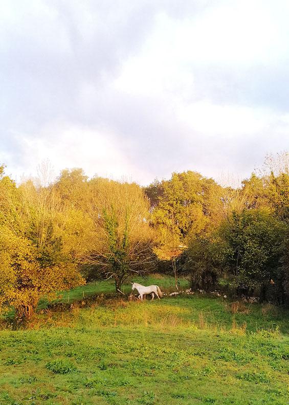 Unicornio, campo de unicornios, hay un unicornio en mi prao, fantasía, épico