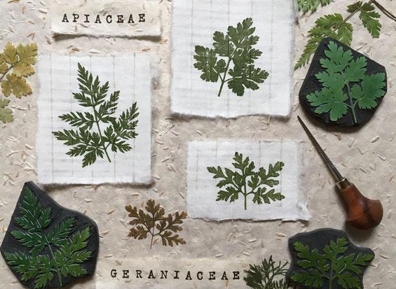 Tampon feuille ombellifère et feuille de pélargonium