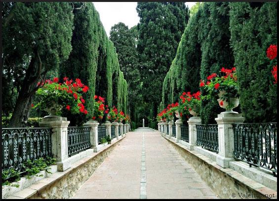 Paseo de los geranios en el  Jardín  de Monforte en València ciudad.