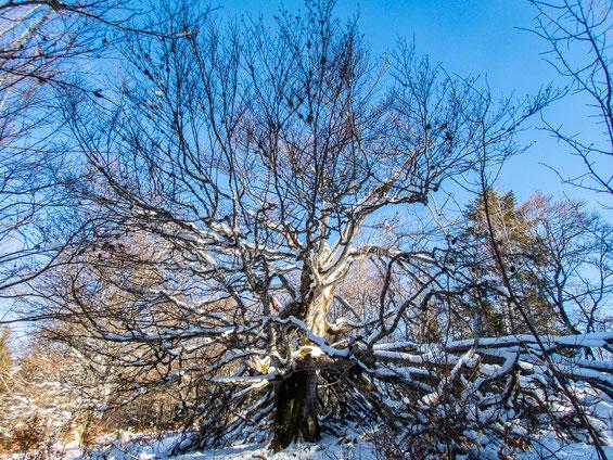 Eichenbäume säumten unseren Weg
