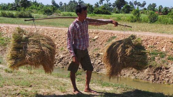 80% der Bevölkerung lebt von der Landwirtschaft