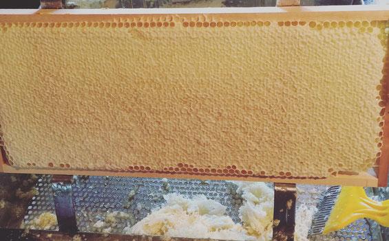 Honigernte und Schleudern