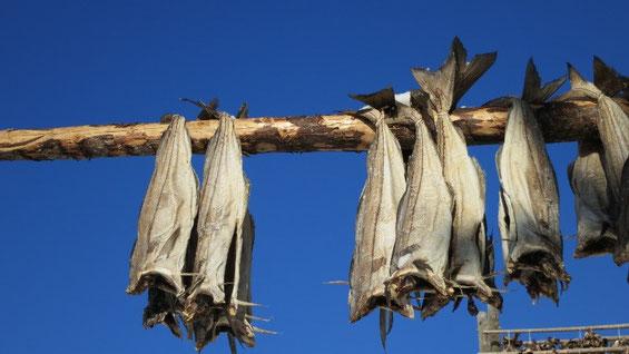 Paarweise werden diese Fischleiber oder auch nur die Köpfe über die Gestelle gehängt.