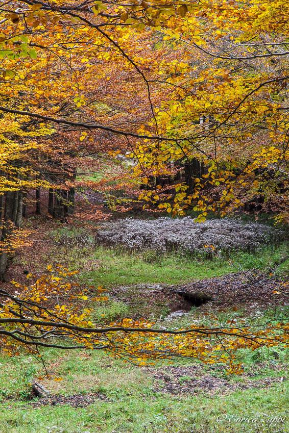 Finestra sull'autunno alla Burraia