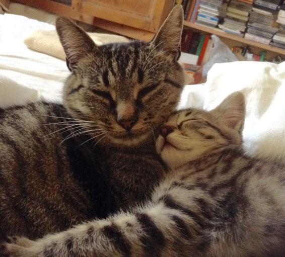 Miumiu & Misty