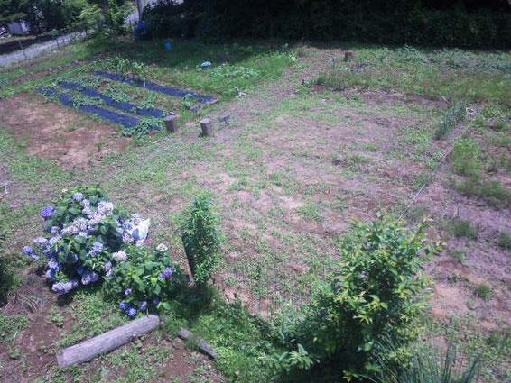 14.7.12撮影 現在空いている畑(小屋、水場近くの絶好の場所です。)