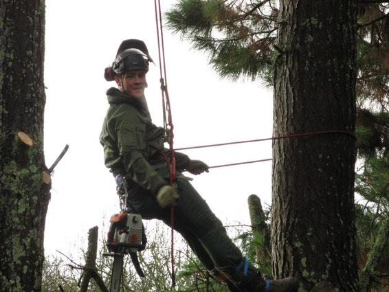 wezenn elagage devis gratuit brest plougastel taille arbre haie grimpeur élagueur david laurent entretien espace vert BMO entretien jardin haie arbuste tarifs cornemuse