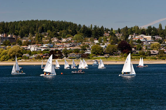 Several small sailboats from a sailing school practice on the calm waters of Comox Bay with the town in the background.