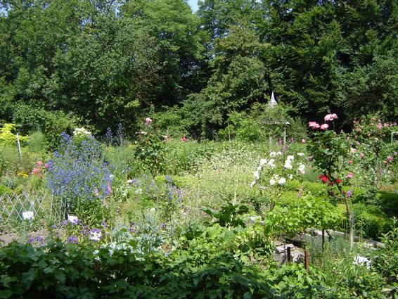 Le jardin en juin, en pleine floraison (roses, bourrache, pavots, choux etc)