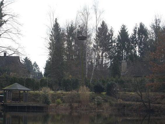 Männchen 6X970 auf dem Nest 22.03.2010