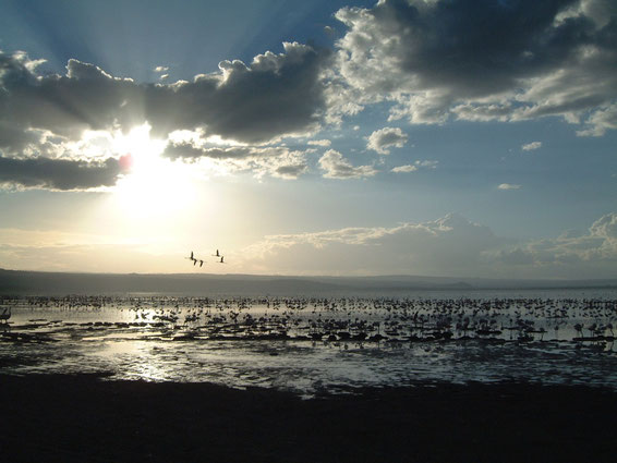 Flamingos on Lake Nakuru, 2007, Lorraine Williams