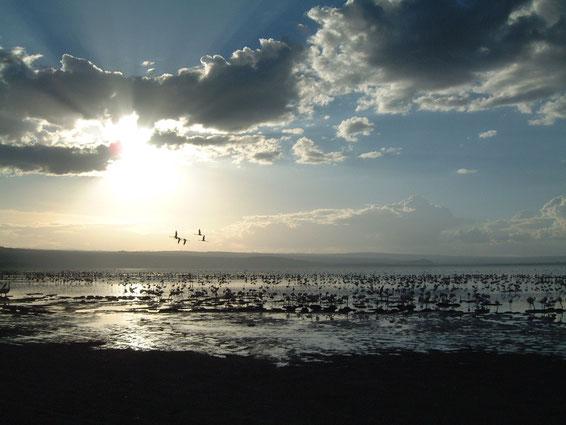Flamingos on Lake Nakuru, 2007, Lorraine Williams