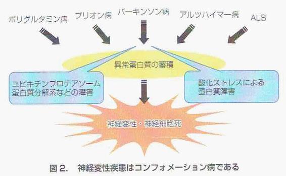 神経変性疾患はコンフォメーション病(蛋白質が凝集体を形成し蓄積)である