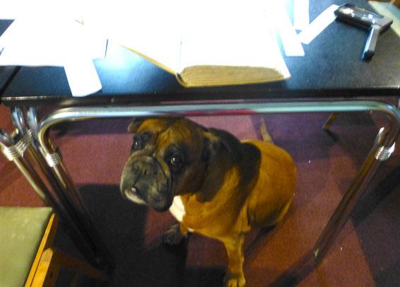 Ein echt armer Hund - unsere Boxer-Hündin Ronja wartet unglücklich im Archiv