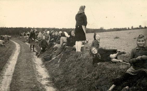 Lotzdorf, an der Hohle (Kühnheide-Weg)  – Warten auf die Feld-Freigabe    (Foto ca. 1949: Sammlg. A. Wünsche)