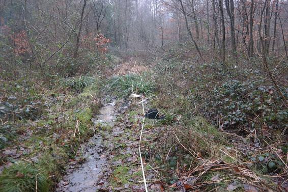 Vermessen von bestehenden Rückegassen und Aufnahme von existierenden Pfützen auf Wegen vor der wiederholten Durchfahrt. Dabei wurden alle Pfützen zur Permanenz klassifiziert und nach Fressfeinden untersucht.