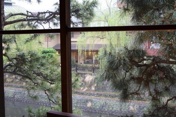 La pluie a cessé. Les pins s'égouttent.