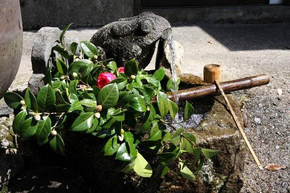 Camelia, fontaine et grenouille