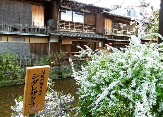 Gion le long du canal shirakawa