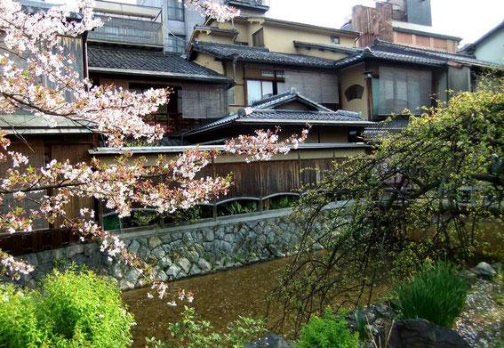 Ochaya et sakura le long du canal Shirakawa