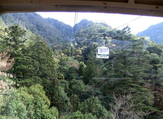 Le téléphérique au-dessus de la forêt primaire