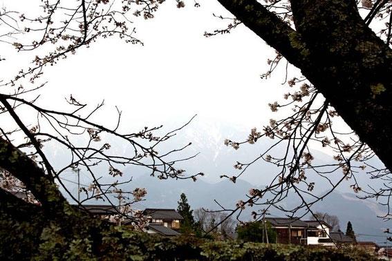 Magome : neige et sakura