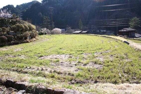 Rizières à Tsumago