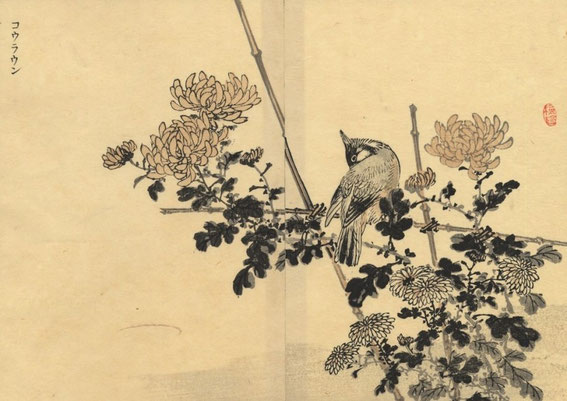 Kōno Bairei - Bulbul Orphée (Pycnonotus jocosus) Bairei's Album of 100 Birds Volume 2 - la Terre (Chi 地)