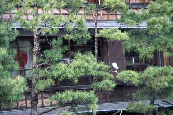 Itō K's house - Matsukawa - héron